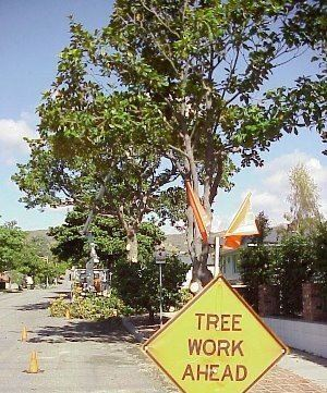 The members of Venturas Tree Advisory Committee meets quarterly at 5pm and you can access their minutes and agendas online. The baord consists of five members that serve for year terms. Photo from: The City of Ventura